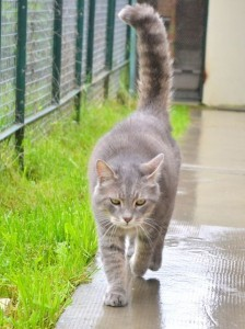 Neville - Adopté en juin 2013