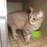 Nina - Adoptée en juin 2011
