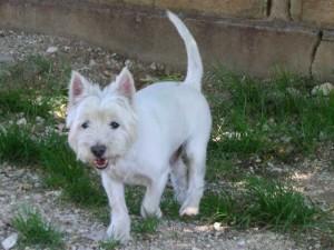Nousky - Adopté en septembre 2009