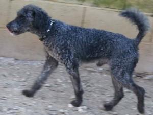 Oscar - Adopté en février 2008
