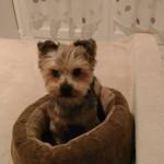Jocelyne nous envoie des photos de Foufou, rebaptisé Noa, dont elle nous dit que c'est un amour de petit chien, adorable, qui sait rendre tout l'amour qu'on lui donne (novembre 2017)