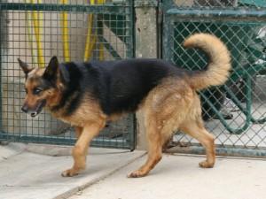 Patka - Adoptée en août 2008