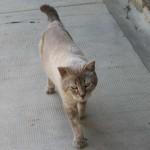 Pierrick - Adopté en décembre 2009