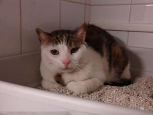 Pitchounette - Adoptée fin avril 2009
