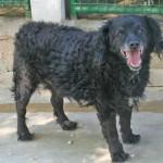 Socrate - Adopté en juin 2012
