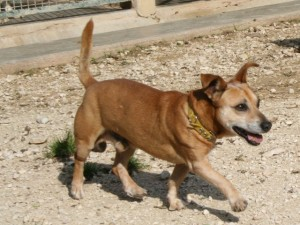 Ralph - Adopté en mars 2010