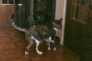 Raoul apprécie son bonheur. Il a retrouvé, chez sa maîtresse, un autre cas des cailloux : la chatte Coralie, petite sauvageonne qui n'acceptait pas, lors de son adoption, qu'on la, touche !