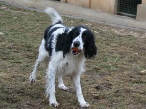 Rasta - Adopté en décembre 2009