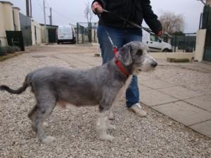 Réno - Adopté en mars 2012