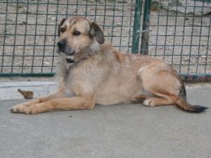 Rox - Adopté en février 2013