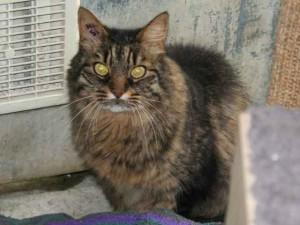 Sabrina - Adoptée en janvier 2013