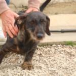 Samy - Adopté en octobre 2011