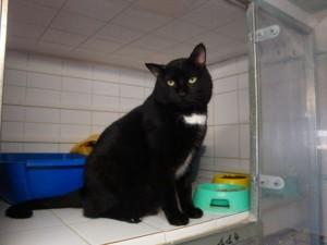 Séraphin - Adopté en février 2010