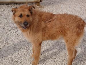 Siméon - Adopté en février 2011