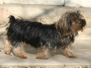 Skippy - Adopté en janvier 2013