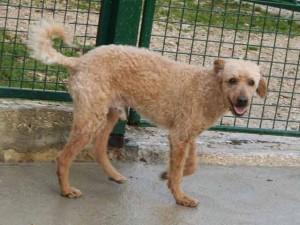 Snoopy - Adopté le 31 décembre 2007
