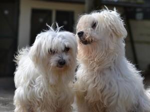 Sofia et Snoopy - Adoptés en décembre 2013