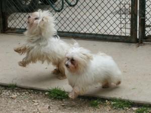 Sophia et Snoopy - Adoptés en août 2008