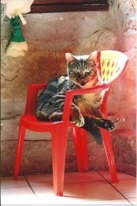 Stevan, rebaptisé Thora dans son fauteuil