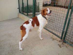 Tango - Adopté en septembre 2012