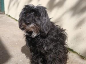 Tatienne - Adoptée en avril 2011