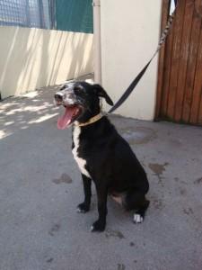 Tessy - Adoptée en septembre 2011