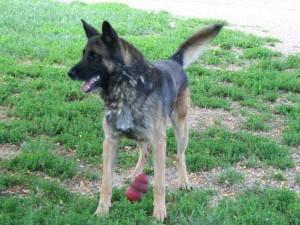 Thomas - Adopté en février 2009