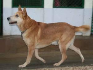 Tilou - Adopté en janvier 2013