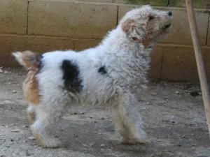 Titus - Adopté en mai 2008