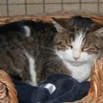Valentine - Adoptée en avril 2008