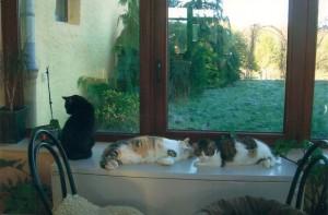 Valentine a eu la bonne surprise d'être accueillie dans son nouveau foyer par deux de ses congénères.
