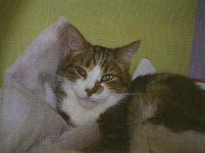 Wilfrid se repose dans son coussin préféré