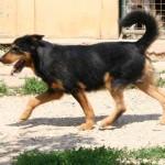 Yvain - Adopté fin juin 2008