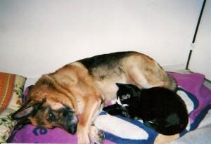 Zizou est tellement heureux qu'il a pris le chat de la maison sous sa protection.