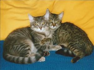 Zorro et Zora, inséparables ont trouvé de très bons maîtres et apprécient le confort qui leur est accordé.