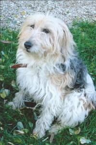 Mélissa, adoptée en septembre 2016, rebaptisée Mishka, avant son passage chez le toiletteur.