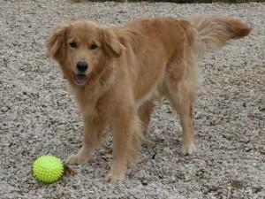 Félix chien au refuge