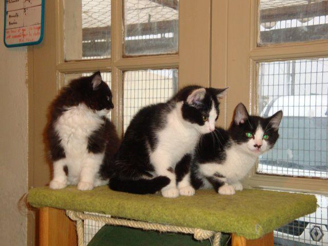 afflux de chiots et de chatons spa des cailloux. Black Bedroom Furniture Sets. Home Design Ideas