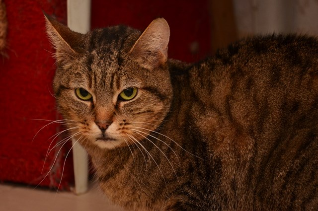 la chatte Babette