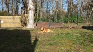 Scooby dans son jardin