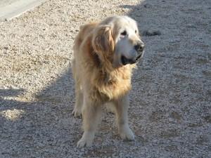 Byron, adopté en mars 2018