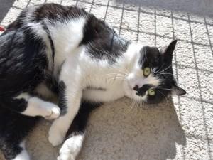 Edmond, adopté en mars 2017