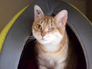 Farrah, adoptée en juin 2018