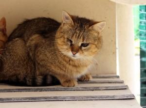 Géraldine, adoptée en octobre 2016