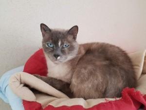 Jasmine, adoptée en septembre 2018