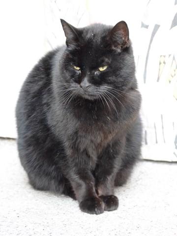 lionel craint les autres chats spa des cailloux. Black Bedroom Furniture Sets. Home Design Ideas