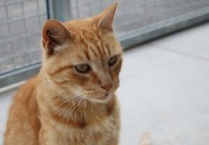 Mattéo, adopté en octobre 2018