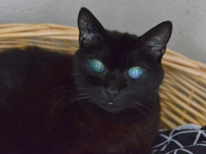 Nello, adopté en octobre 2018