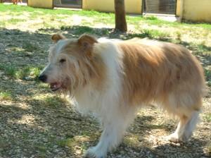 Peluche - adopté en Septembre 2015