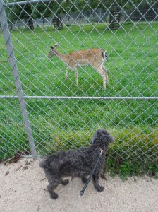 Le chien Dalton en promenade au parc de la Colombière